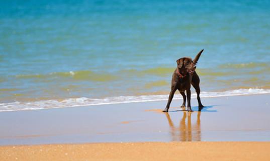 préparer les vacances de votre animal de compagnie