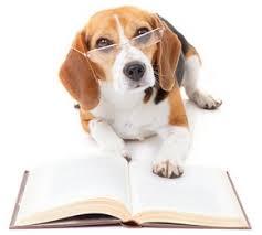 guide dressage chien gratuit PDF