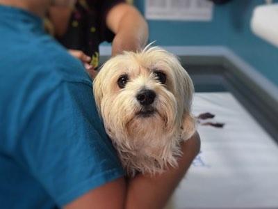 pathologies les plus frequentes chez le chien