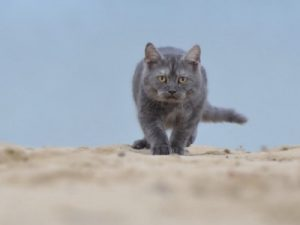 Mon chat va-t-il s'adapter au bord de mer