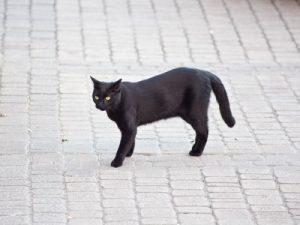 Le chat en ville : Que faire