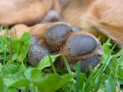 cousinnets du chien
