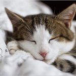 Quel environnement de vie pour un chat