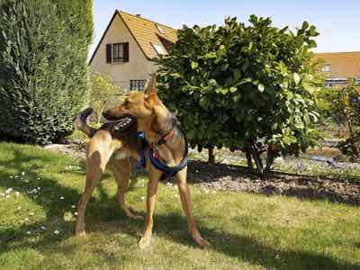 environnement du chien