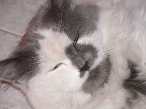 Coryza du chat - Sur le Mammouth Dechaine