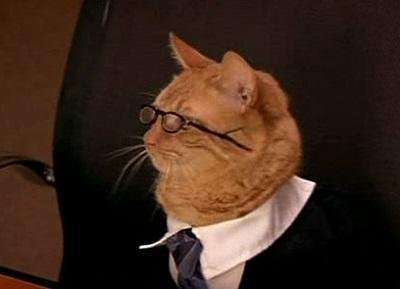 Les chats et la loi, ce qu'il faut savoir