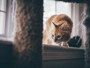 Rendre son chat à l'aise dans n'importe quel environnement