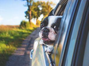 voyager chien voiture