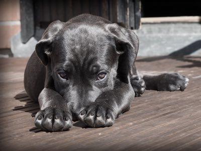 chien timide et craintif