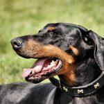 cancer du chien