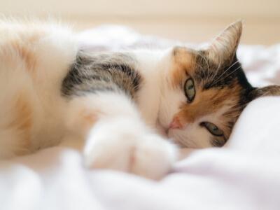 prise en charge tarif chat veterinaire