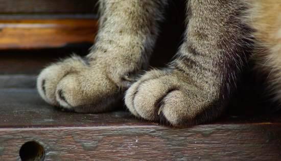 fin d'une pratique abjecte de dégriffage des chats à new york